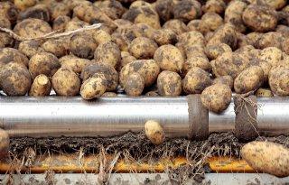Belgische aardappelen zijn wereldtop