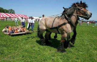 Trekpaardclub blijft koninklijk