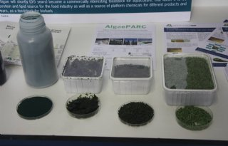 Nieuwe+algen+geschikt+voor+dieetvoeding