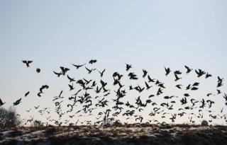 LTO Noord tevreden over ganzenakkoord