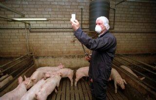 Vaccinatie+beste+optie+bij+varkenspest