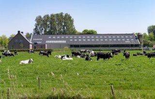 PvdA%3A+zorg+om+groei+melkveesector