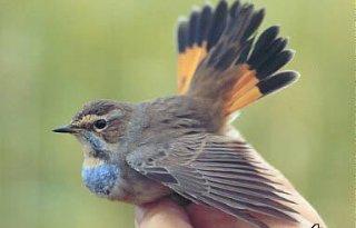 Vogels hebben last van stikstof