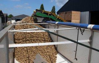 BAI: 3,45 miljoen ton consumptieaardappelen
