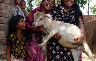 Eko%2Dgeitenboeren+doneren+geiten+aan+armen
