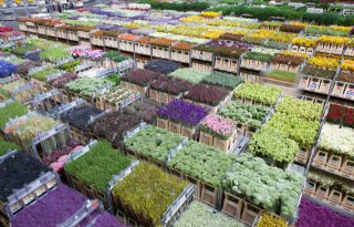FloraHolland+stapt+in+Plastic+Pact+NL