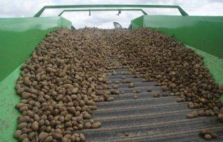 NEPG: nog minder aardappelen