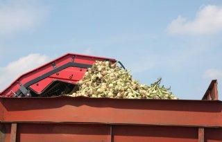 Stemming uienmarkt is prijshoudend