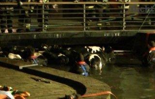 Brandweer vist 25 koeien uit gracht