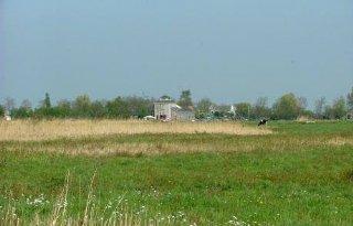 Noord-Hollands veen gaat weer groeien
