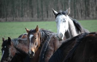 Mannen+te+water+om+paard+te+redden