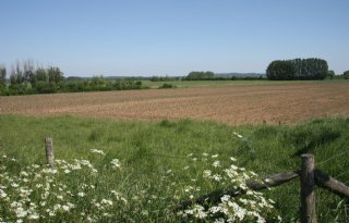 Vergoeding peilverhoging Rijnstrangen