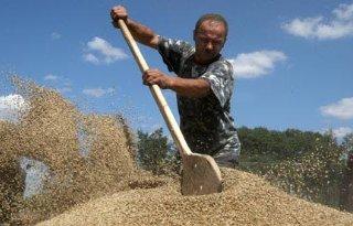 Handelsdeal: 2 miljoen ton graan uit Oekraïne