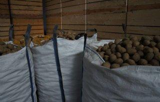 Exportniveau+aardappelen+blijft+hoog