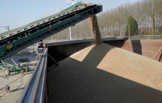 Tekort aan tarwe dreigt in EU