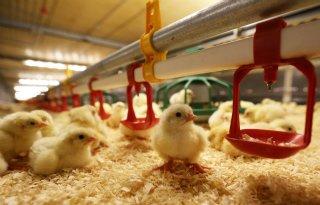 Meer grip op voerkosten, productie en gehaltes