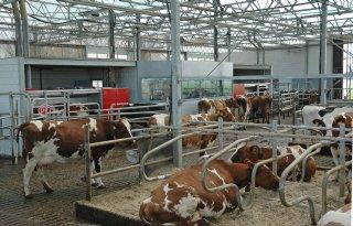 Ademhalingstest+voor+tweeduizend+koeien