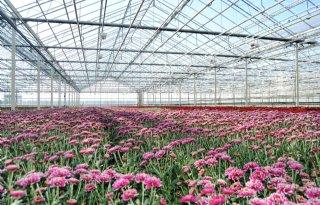 Plan+moet+tuinbouw+nieuwe+energie+geven