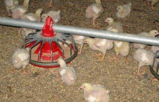 Twee+nieuwe+uitbraken+vogelgriep+Frankrijk