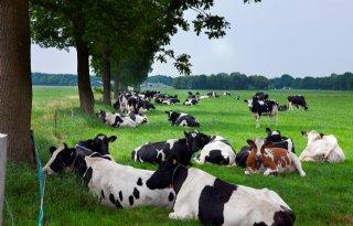 Afbouwregeling+voor+boer+in+probleemgebied