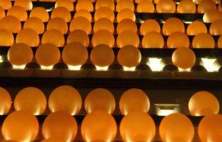 Nederlandse eieren mogen naar VS