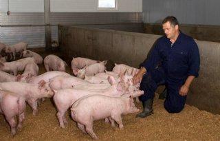 Luxe+varkensvleesconcepten+boeren+goed