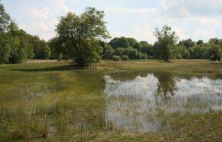 Realistische+natte+natuur+in+Gelderland