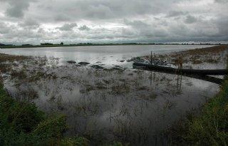 Zomerse inundatie tegen knobbelaaltjes