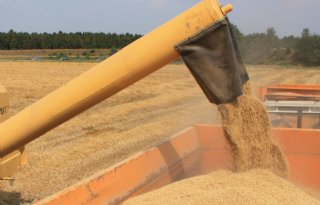 Begin graanoogst in Zuidwest-Nederland