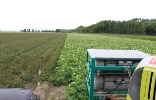 'Illegale inzet koper in biologische aardappel'