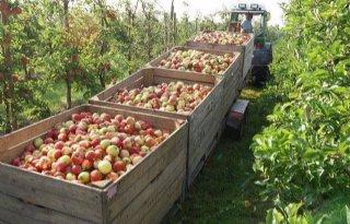 700%2E000+ton+appels+in+Poolse+opslag