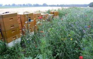 Wintersterfte onder bijen lager