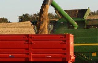 USDA+positief+over+tarweoogst
