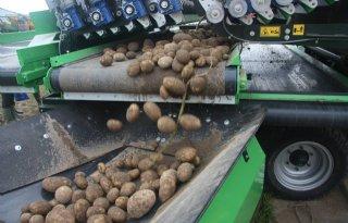 Franse+aardappeloogst+drukt+termijnmarkt