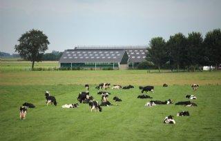 Daling+melkveehouderij+kleinst+in+Groningen