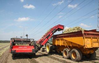 VTA: gemiddeld 57 ton uien