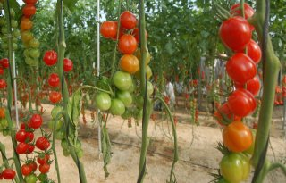 Recordproductie+groenten+in+Almeria