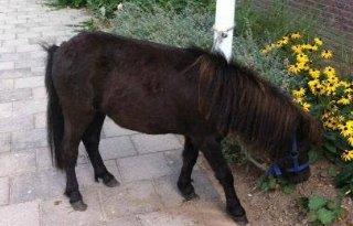 Man houdt pony in perkje in Nijmegen