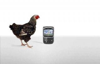 Pluimveehouder loopt digitaal voorop