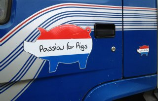 Grote Passion for pigs-stickers
