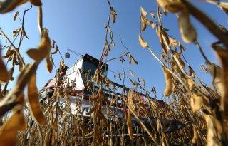 Gelderland geeft grootste impuls aan teelt soja