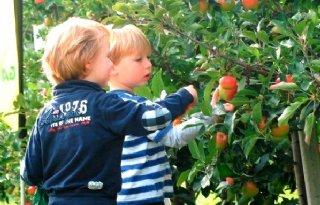 34.000 landgenoten plukken fruit