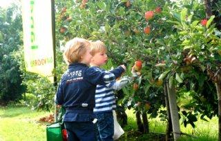 Fruittelers bereiden Appelplukdag voor