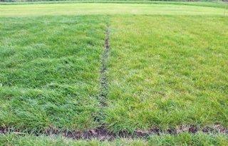 Het+gras+is+groener+in+Friesland