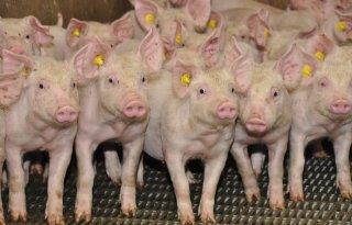 Vier+varkenshouders+krijgen+boete
