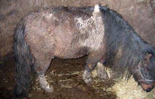 Ernstige dierverwaarlozing in Wagenberg