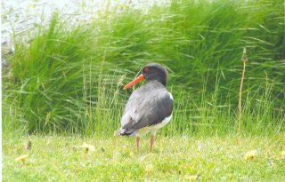 App spaart nest weide- en akkervogels