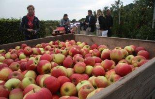 NFO+werkt+aan+landelijke+Appelplukdag