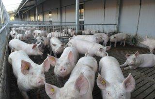 Antibiotica niet indelen naar bedrijfstype