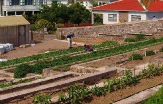 Koningspaar bij biologische boerderij Saba